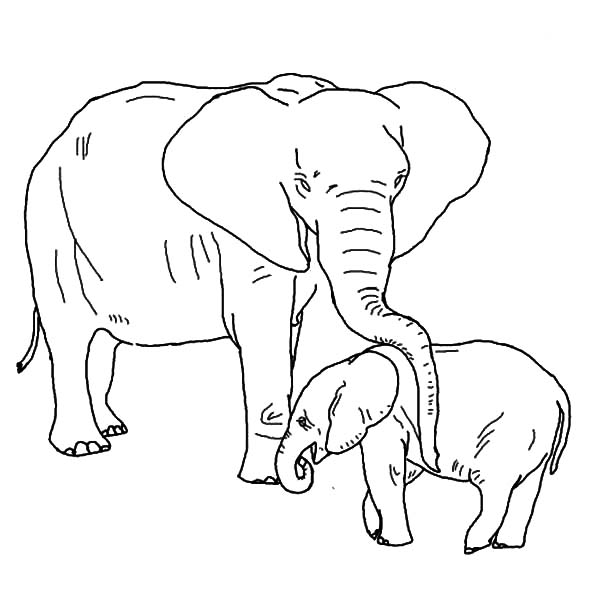 african elephant coloring pages african elephant coloring pages elephant african pages coloring