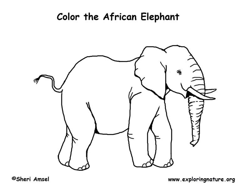 african elephant coloring pages angry african elephant coloring pages coloring sky coloring elephant pages african