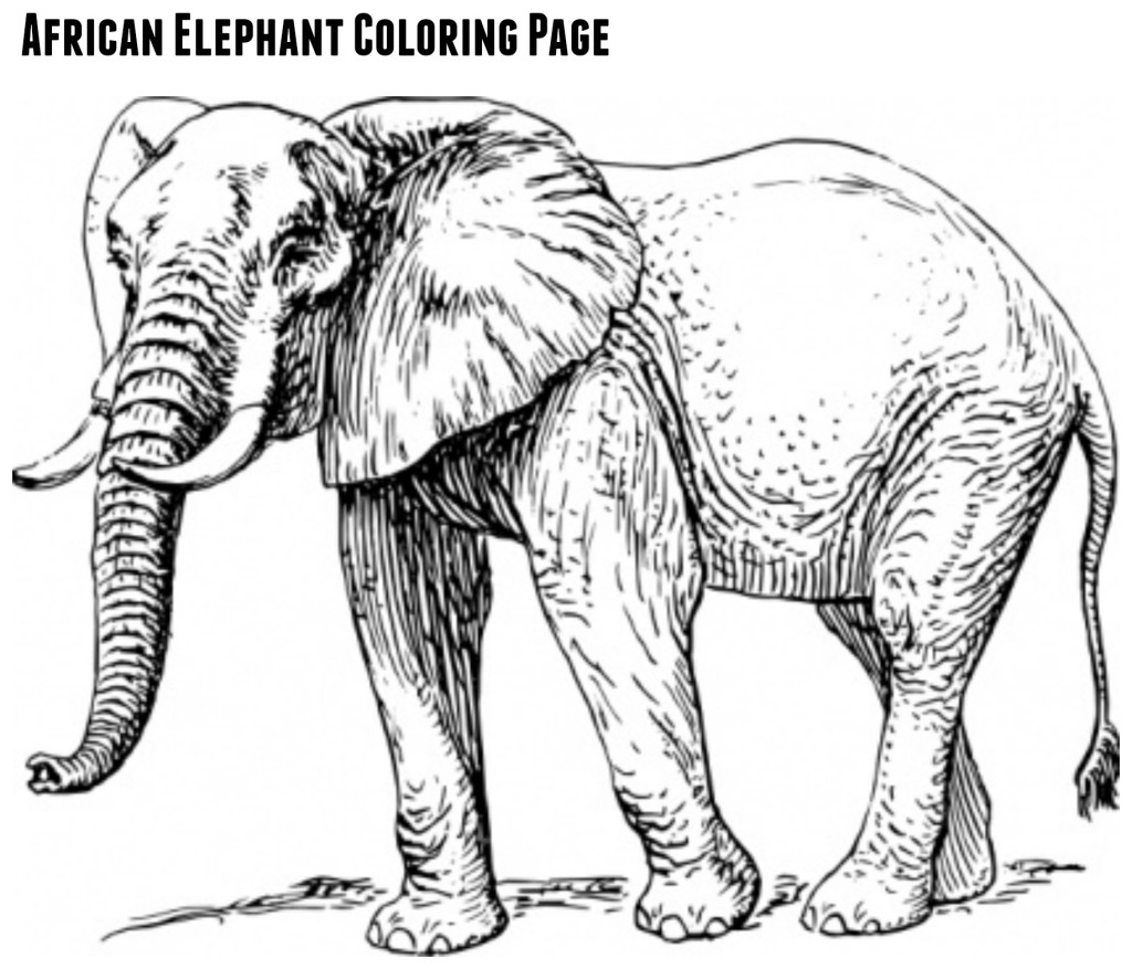 african elephant coloring pages baby african elephant roaring coloring pages coloring sky african coloring pages elephant
