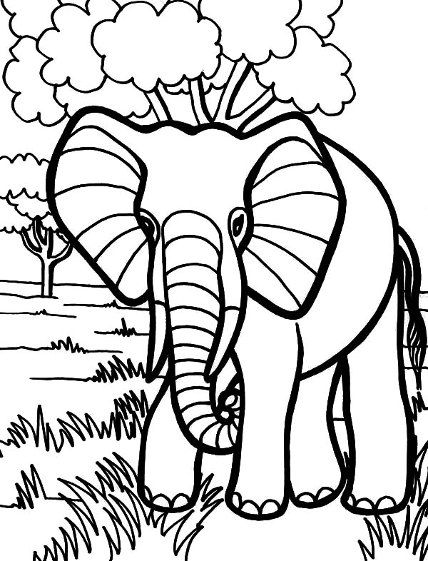 african elephant coloring pages baby african elephant roaring coloring pages coloring sky coloring pages elephant african