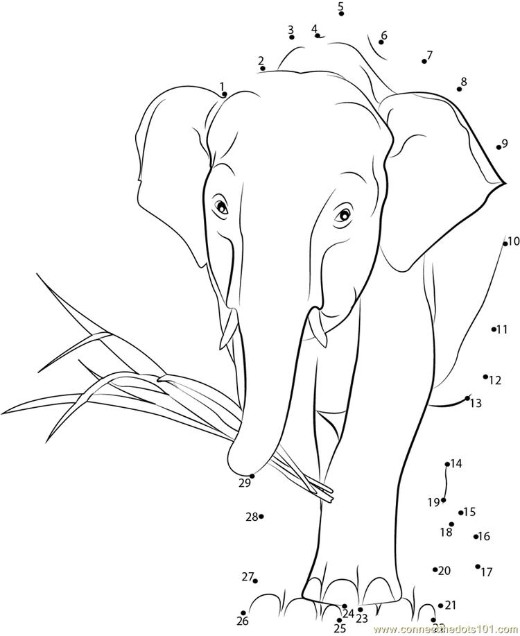 african elephant coloring pages coloring pages for adults elephants at getdrawings free coloring pages african elephant