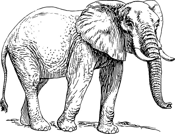 african elephant coloring pages download elephant coloring pages for adults dibujos elephant african pages coloring