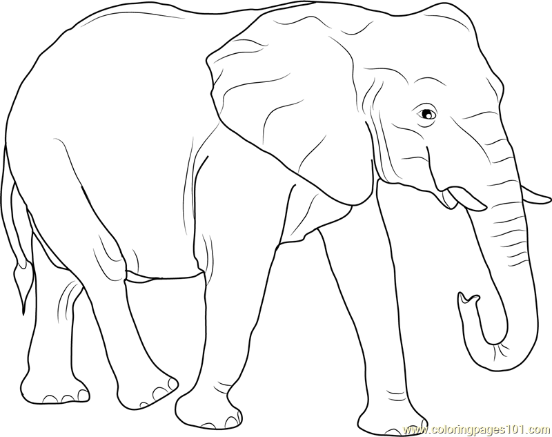 african elephant coloring pages free printable elephant coloring pages for kids african coloring pages elephant