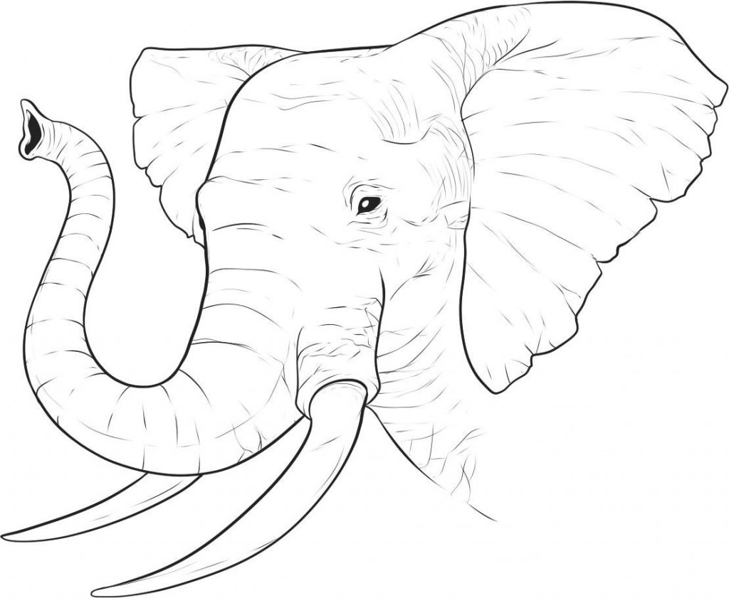 african elephant coloring pages funny elephant coloring pages coloring african pages elephant