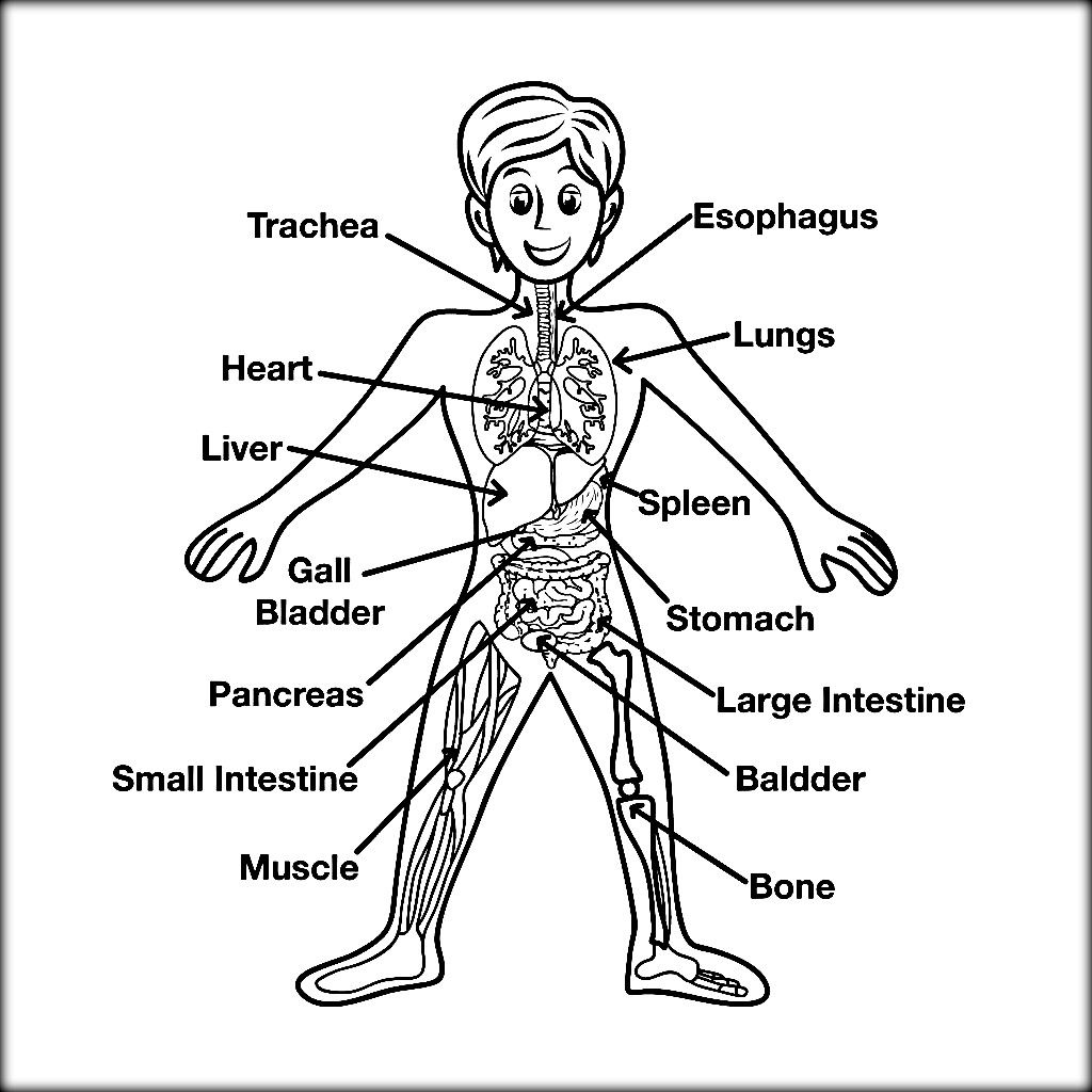 anatomy coloring book anatomy coloring pages for kids coloring home book anatomy coloring