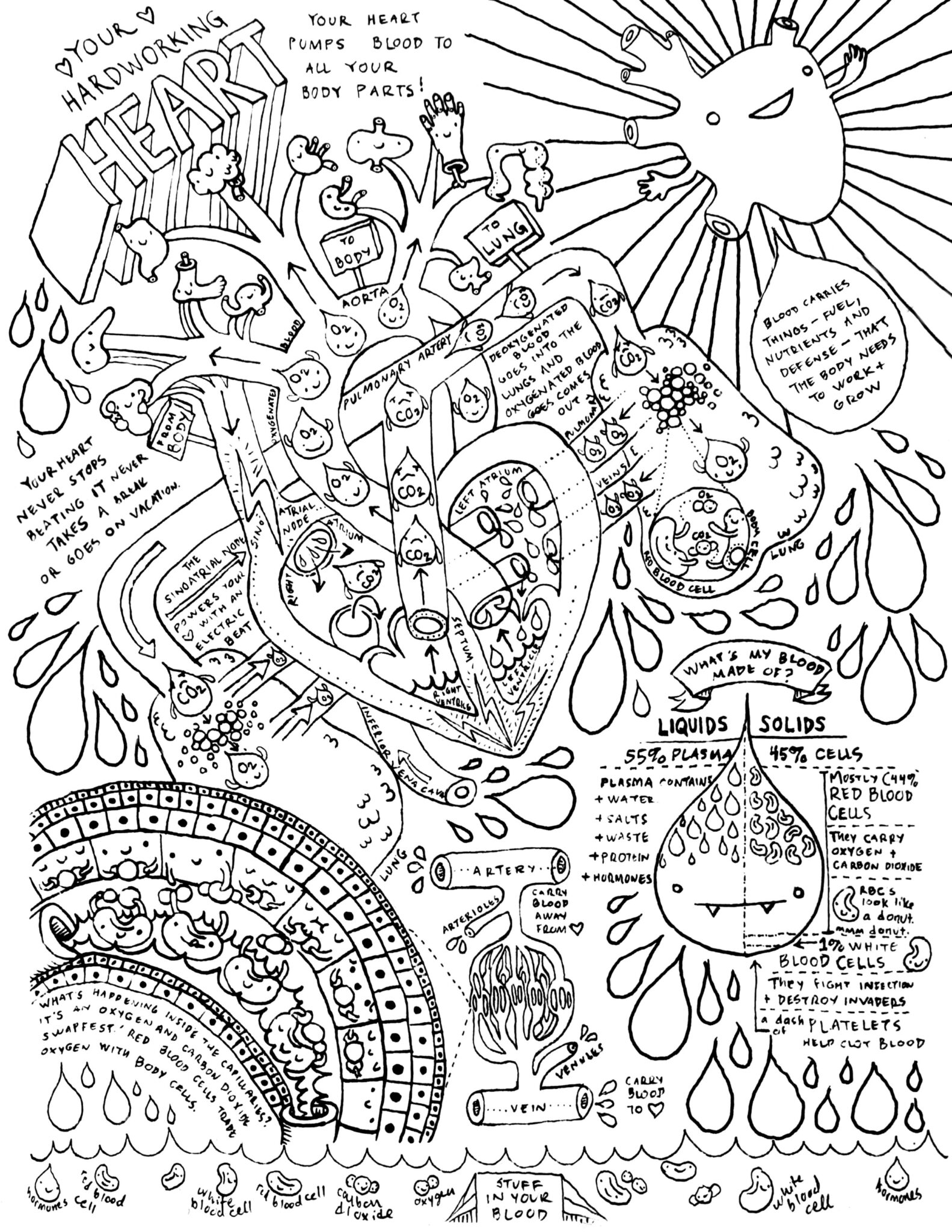 anatomy coloring book free anatomy and physiology coloring pages coloring home coloring anatomy book