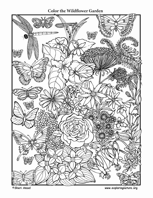 animal habitat coloring pages 29 best images about coloring habitats and animals on habitat animal pages coloring
