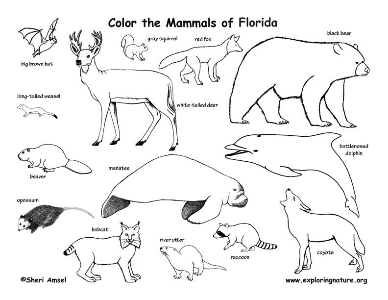 animal habitat coloring pages coloring pages wildlife research conservation animal habitat coloring pages