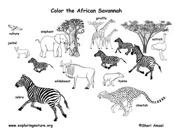 animal habitat coloring pages coloring pages wildlife research conservation pages animal habitat coloring