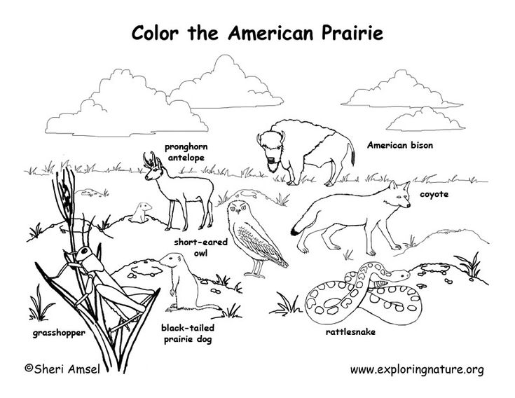 animal habitat coloring pages forest habitat drawing at getdrawings free download coloring habitat animal pages