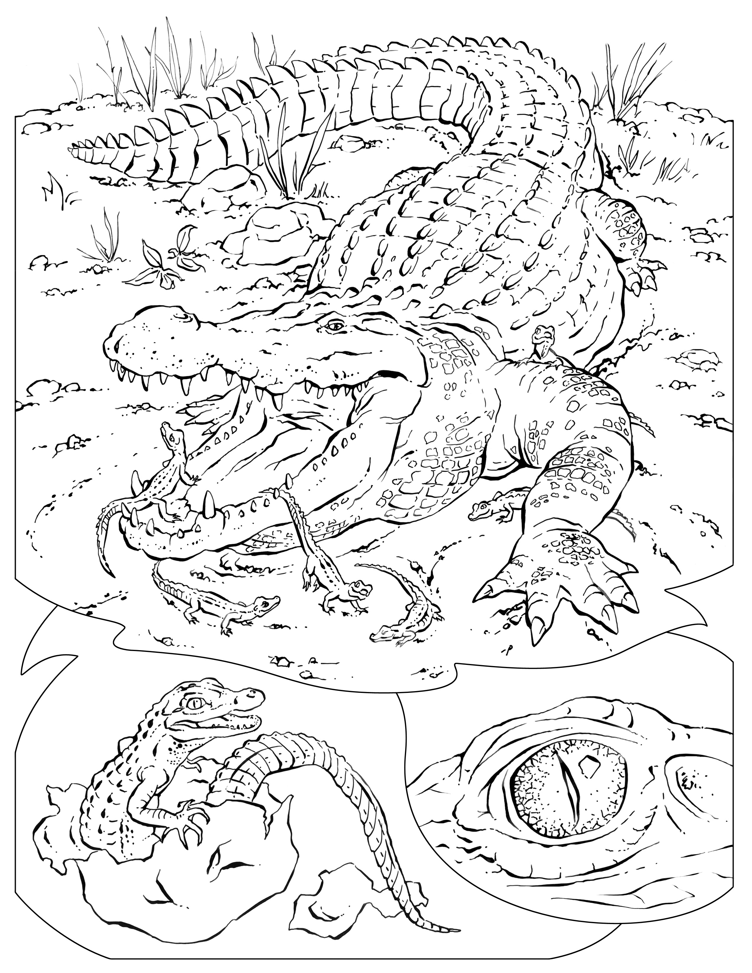 animal habitat coloring pages forest habitat drawing at getdrawings free download pages animal coloring habitat