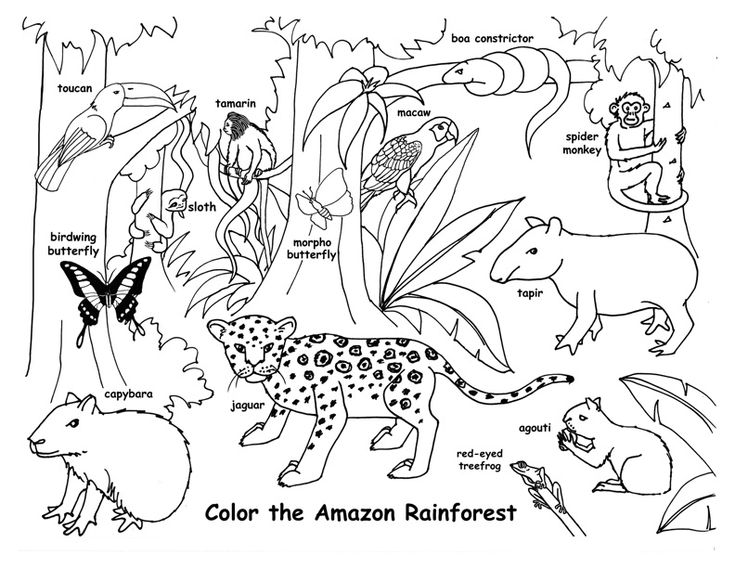 animal habitat coloring pages habitats of the world activity pages coloring animal habitat
