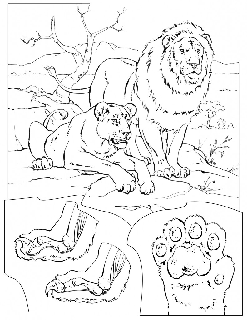 animal habitat coloring pages smiling wetland animals coloring page coloring habitat pages animal