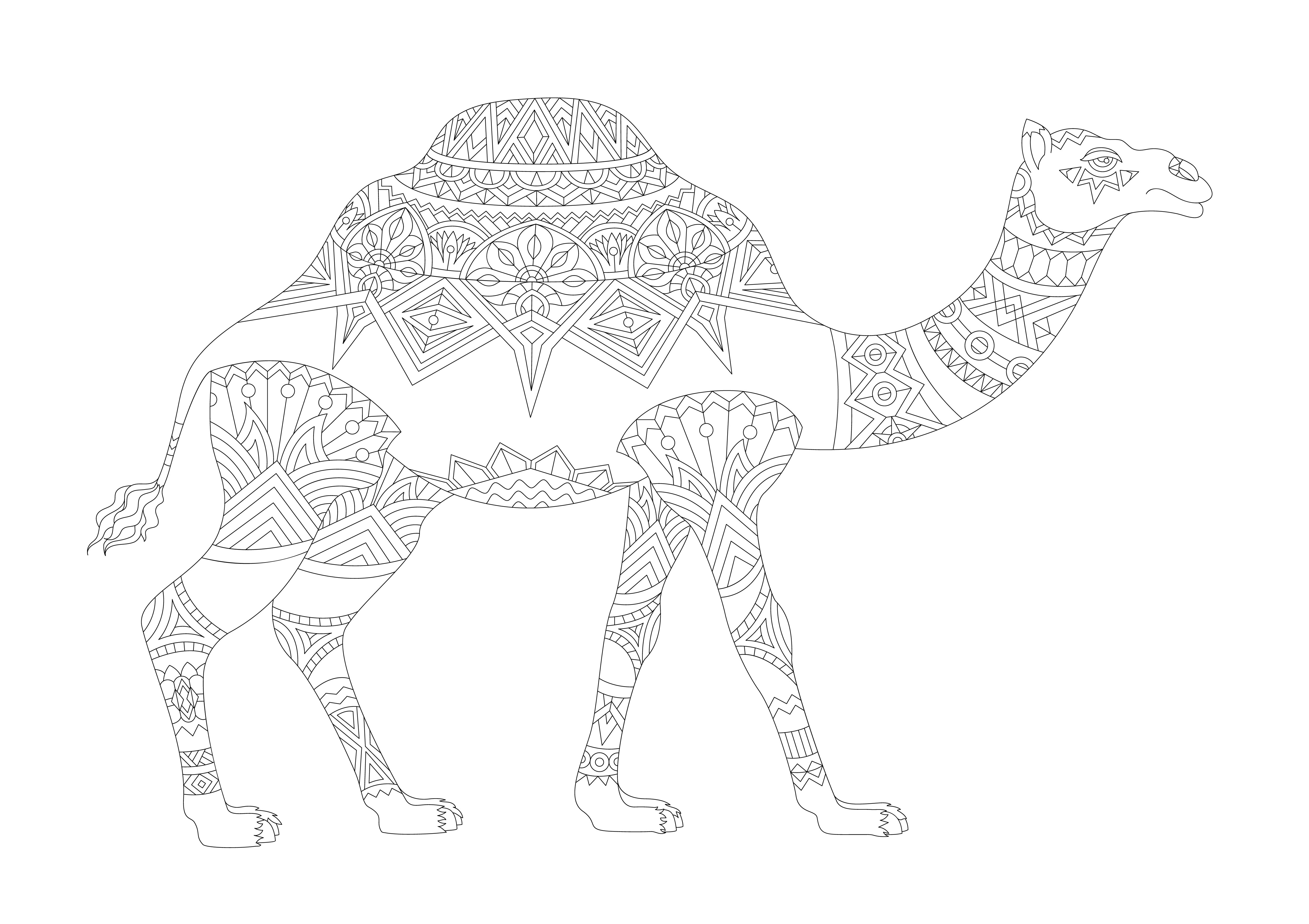 animals drawings to color illustration of animal adult coloring page download free animals color to drawings