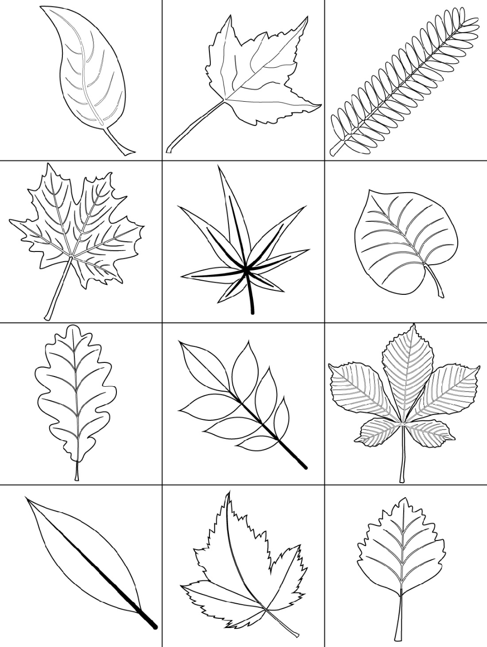 autumn leaves pictures to colour free printable leaf coloring pages for kids cool2bkids autumn colour pictures leaves to
