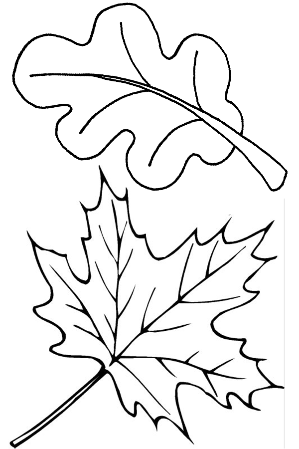 autumn leaves pictures to colour two fall leaves coloring page free printable coloring pages pictures to leaves autumn colour