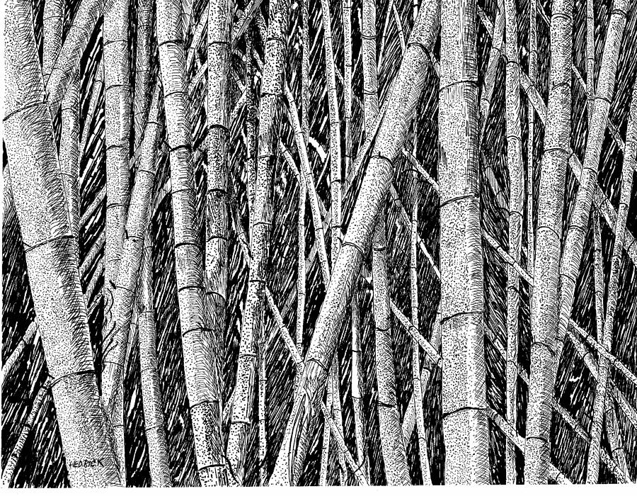 bamboo forest drawing bamboo trees clipart 20 free cliparts download images on bamboo drawing forest