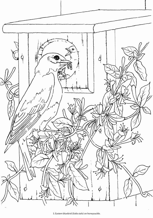 beautiful bird coloring pages beautiful ornamental bird designs coloring page print coloring beautiful bird pages