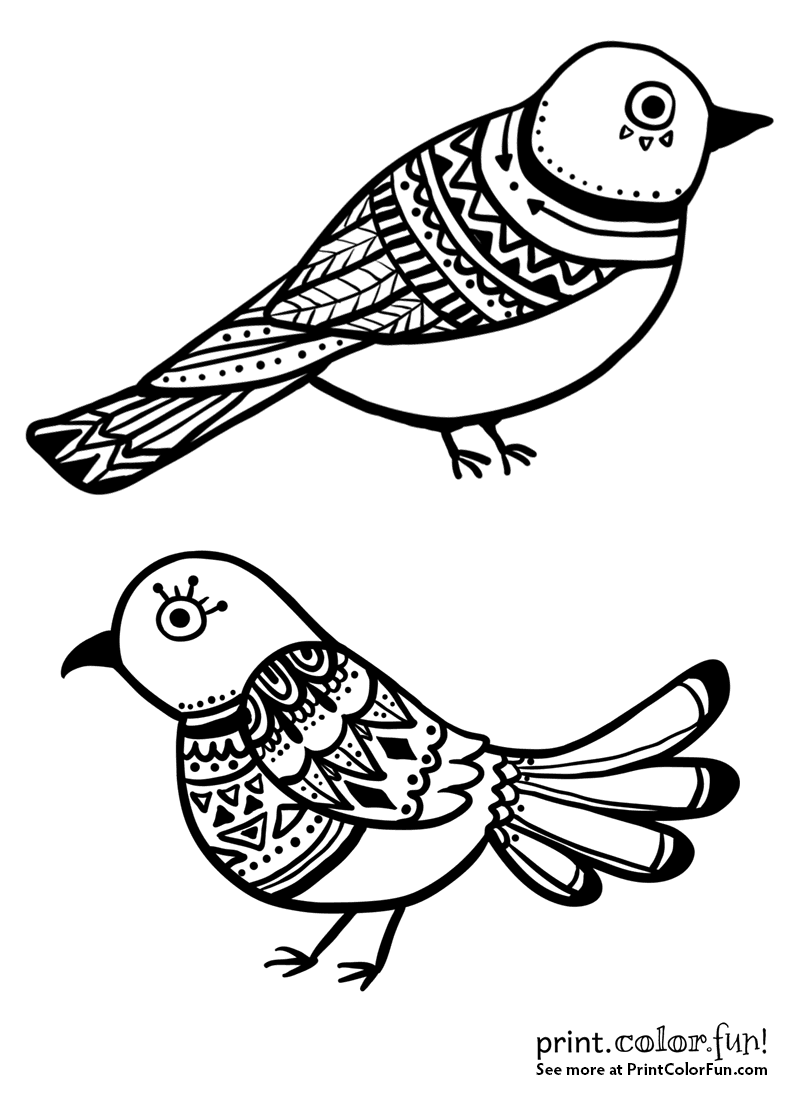 beautiful bird coloring pages birds coloring pages beautiful coloring bird pages