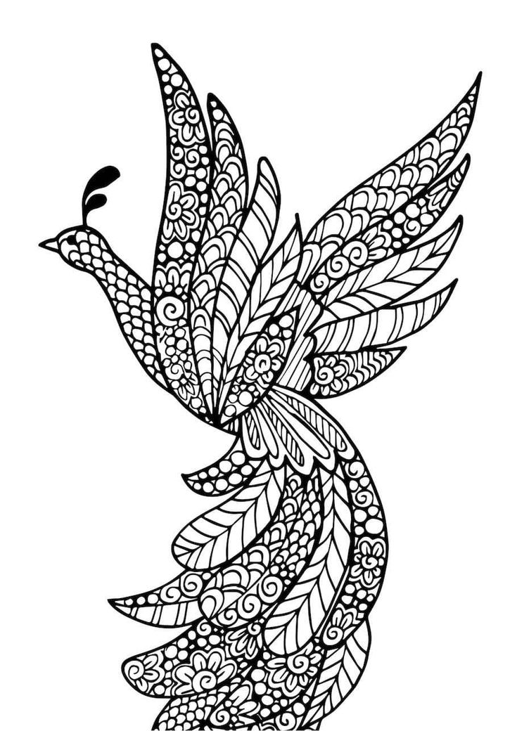 beautiful bird coloring pages fly free bird in flight colouring page with images bird beautiful pages coloring