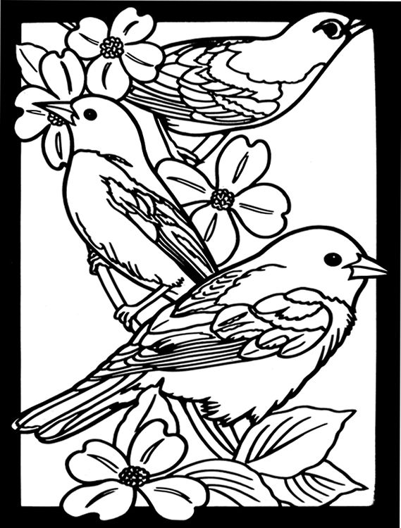beautiful bird coloring pages free printable hummingbird coloring pages for kids coloring bird pages beautiful