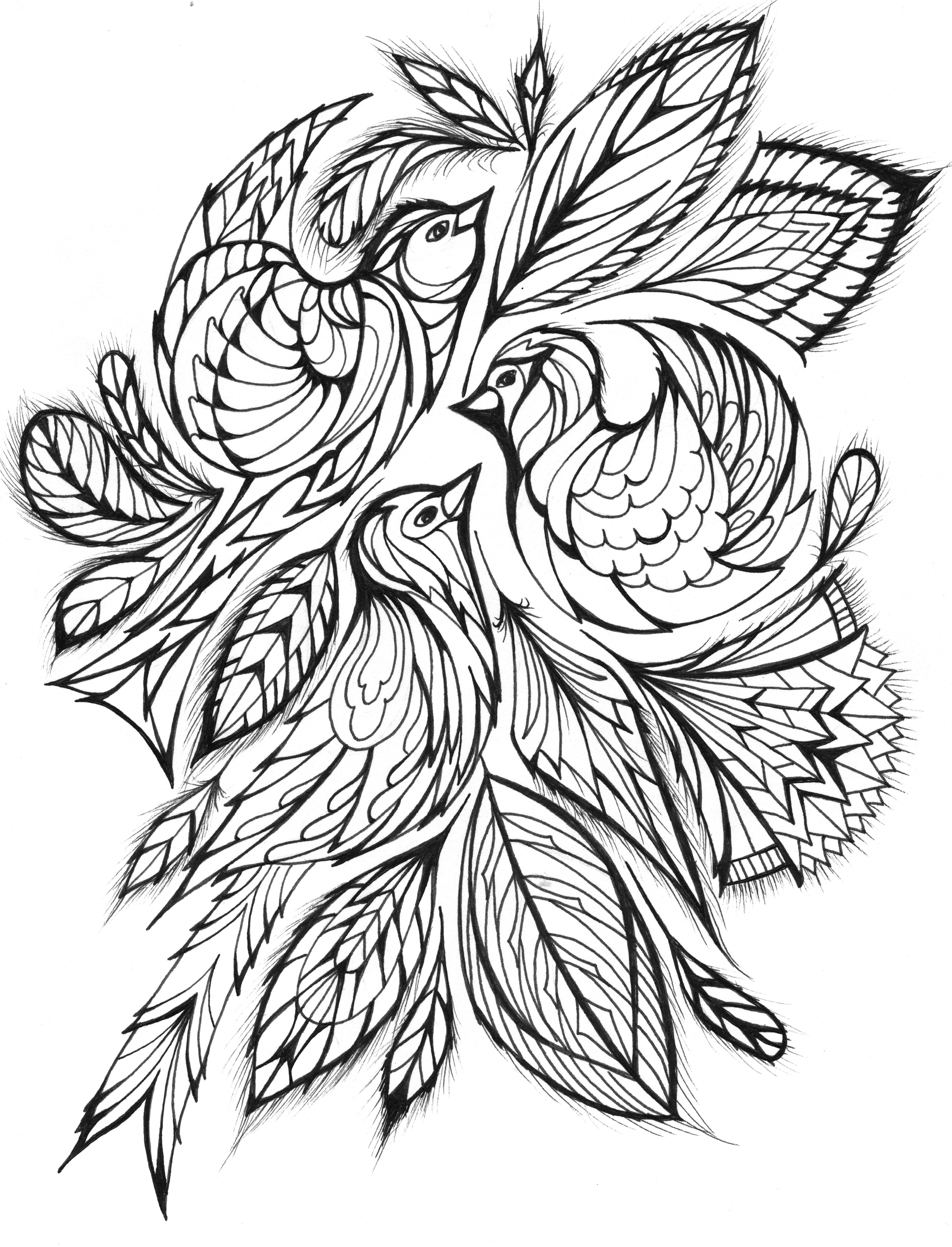 beautiful bird coloring pages free printable hummingbird coloring pages for kids pages bird coloring beautiful