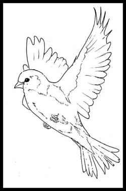 beautiful bird coloring pages hummingbird printable coloring pages digital download of coloring bird beautiful pages
