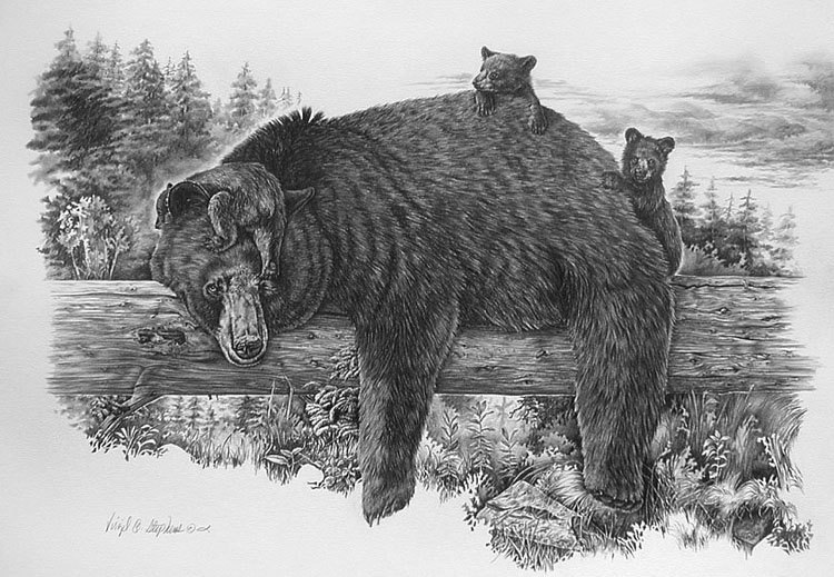 black bear drawings 10 bear drawings showcase hative black drawings bear