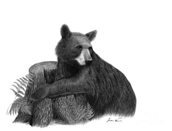 black bear drawings american black bear drawing angry drawing grizzly bear drawings black bear