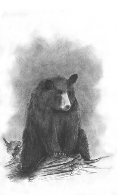 black bear drawings black bear art great big bear illustration drawings bear black