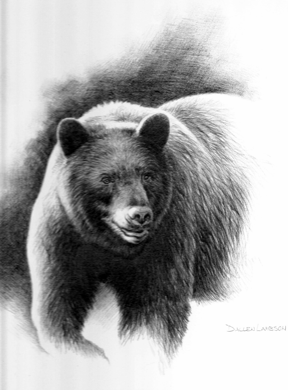 black bear drawings black bear by rodrigodiazaravena on deviantart drawings black bear