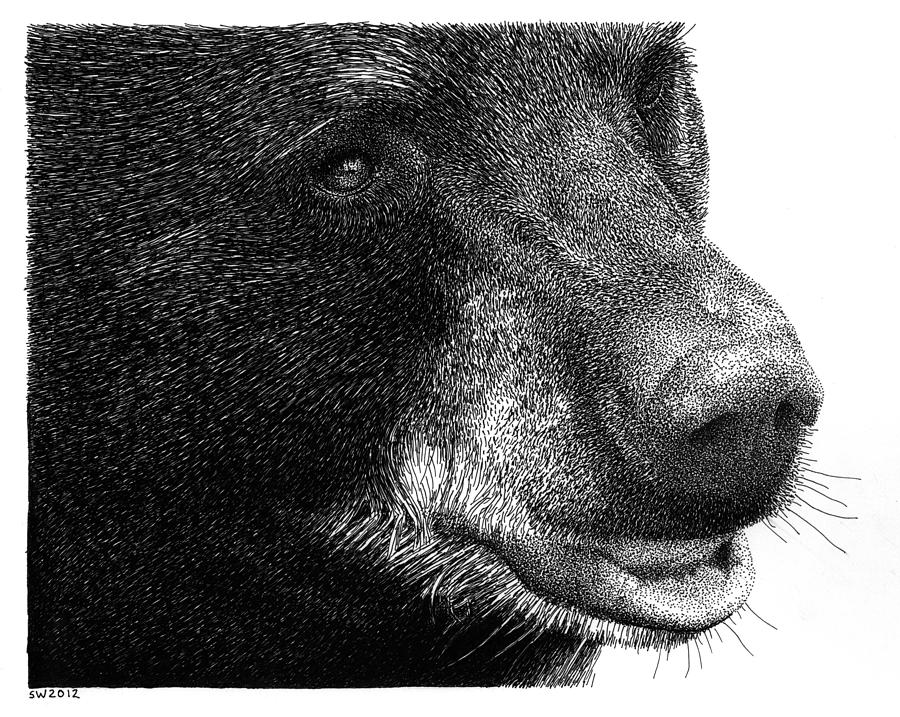 black bear drawings black bear drawing by samantha howell black drawings bear