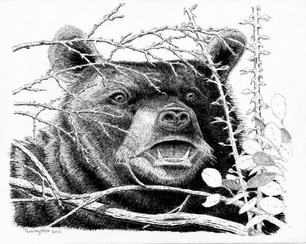 black bear drawings black bear drawings fine art america bear black drawings