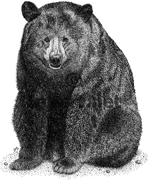 black bear drawings black bear drawings in pencil bear drawing source bear drawings black bear