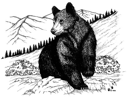 black bear drawings black bears drawing by becky mason bear drawings black