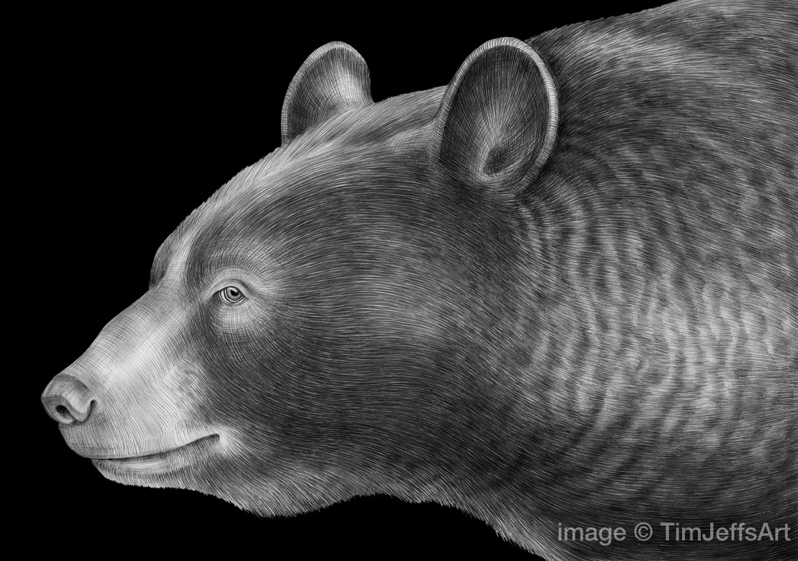 black bear drawings drawn grizzly bear roaring black pencil and in color bear drawings black