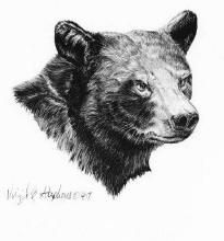 black bear drawings fireflight photo black bear pen and ink drawing drawings bear black