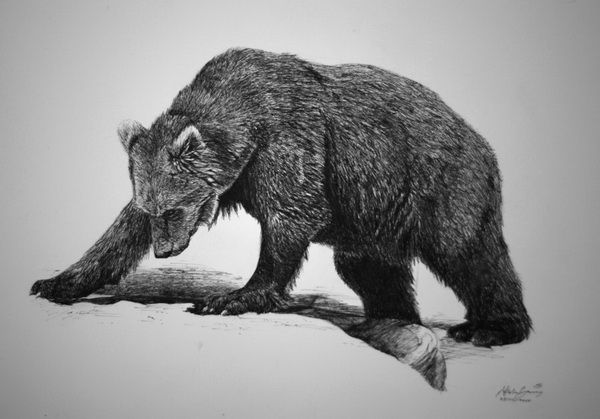 black bear drawings image result for how to draw a louisiana black bear drawings black bear