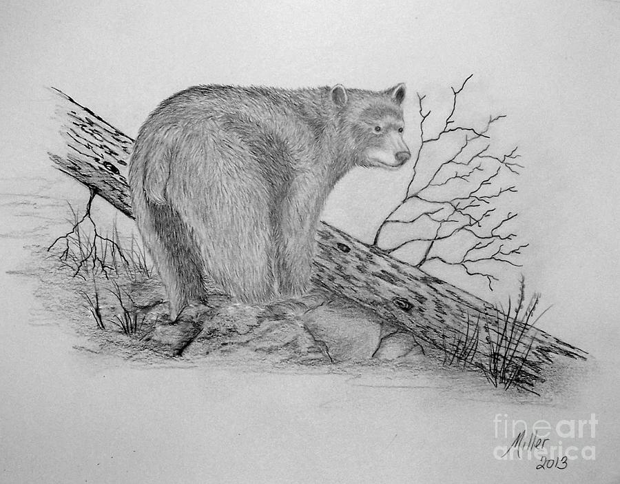 black bear drawings little black bear cub drawing by suzanne mckee black drawings bear