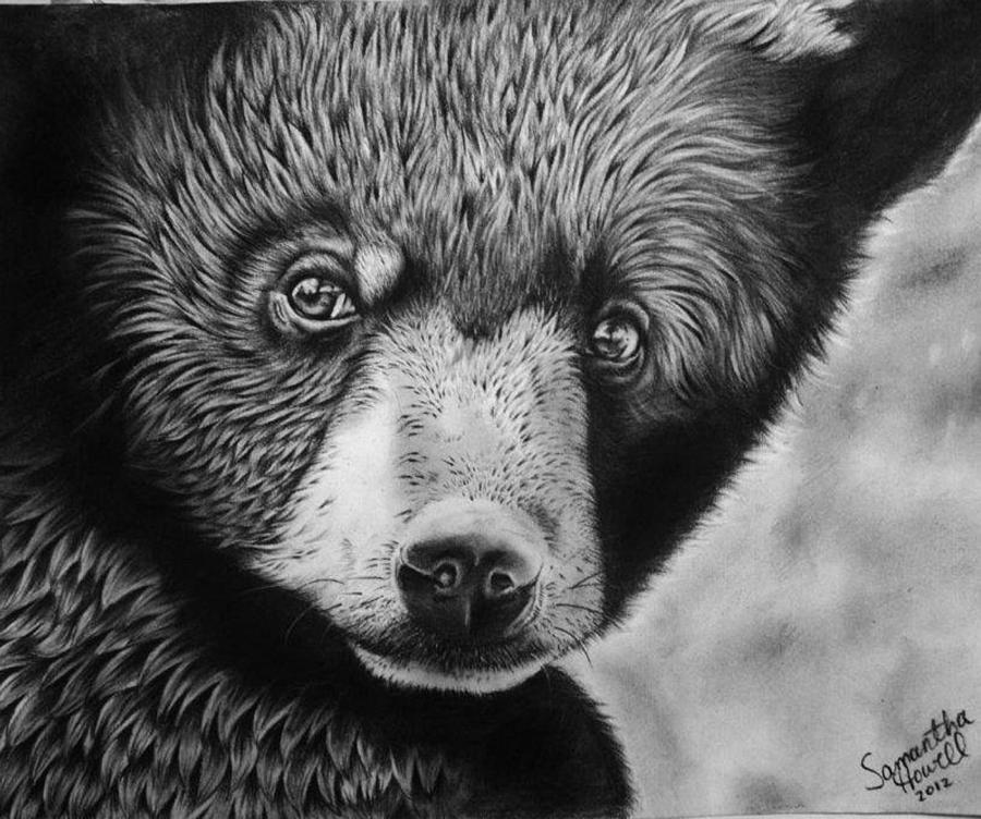 black bear drawings quotblack bear on newsome creekquot pencil drawing barb bear black drawings