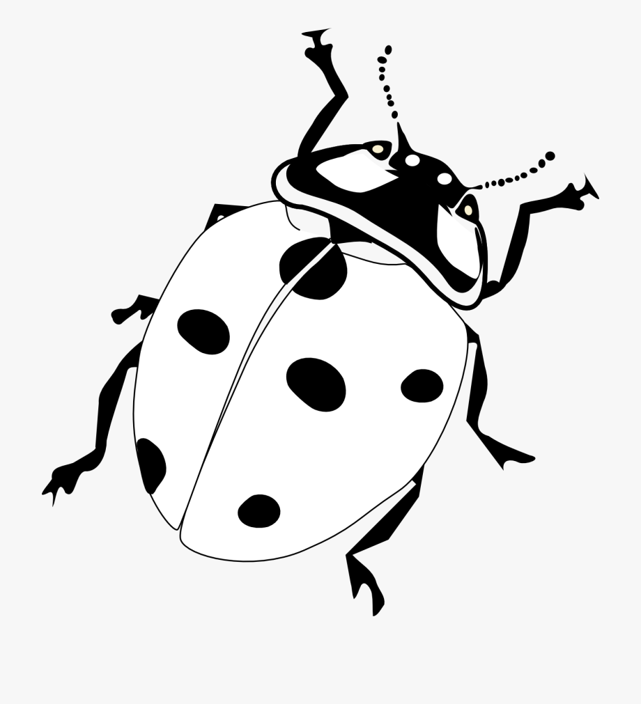 bug pictures to color insect coloring pages coloring pages to print pictures bug color to
