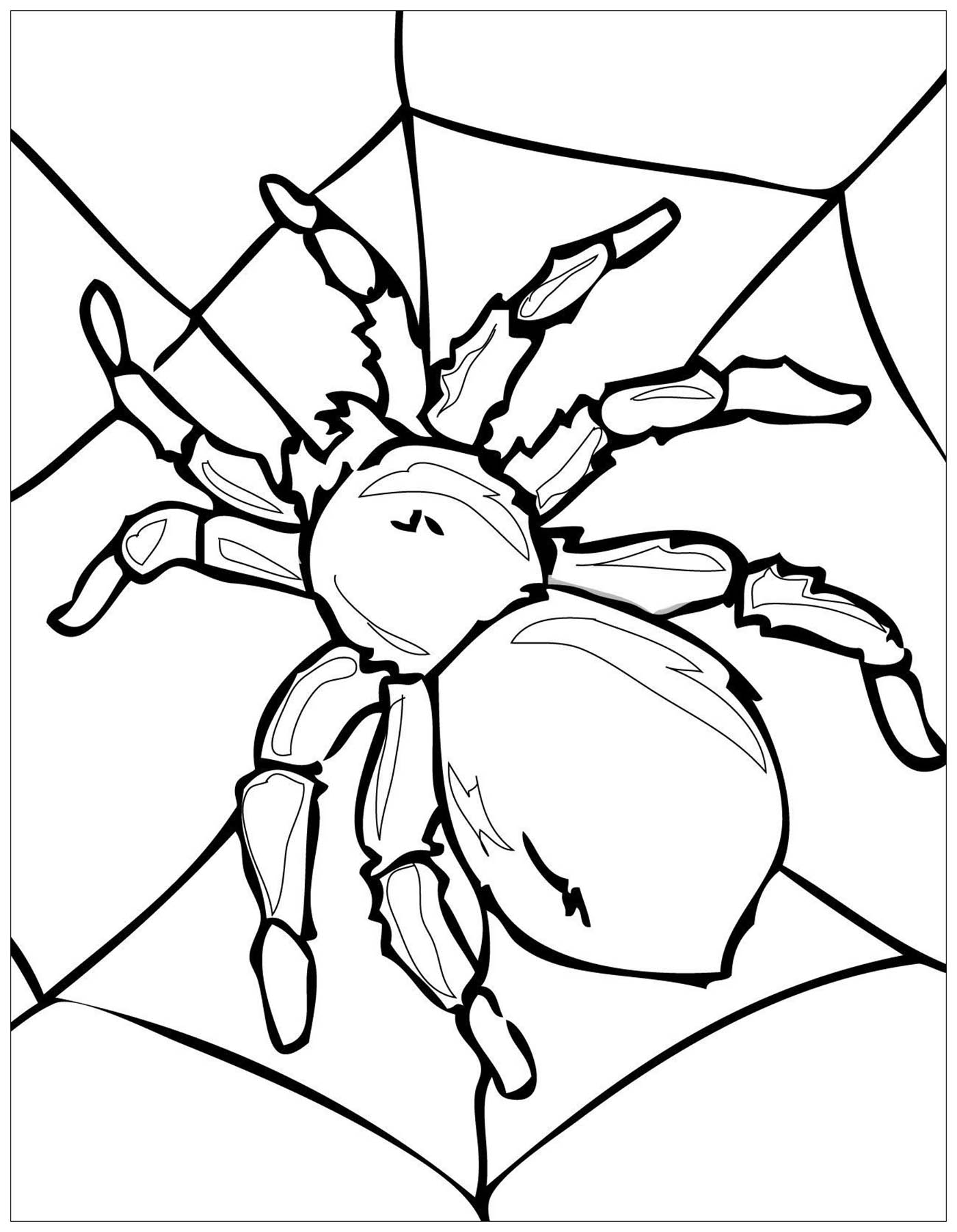 bug pictures to color insects for kids insects kids coloring pages to color pictures bug