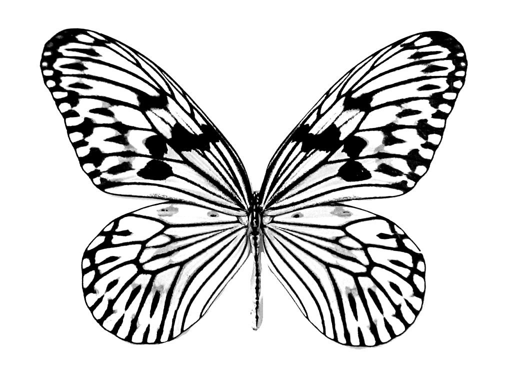 butterflies coloring page free printable butterfly coloring pages for kids coloring page butterflies