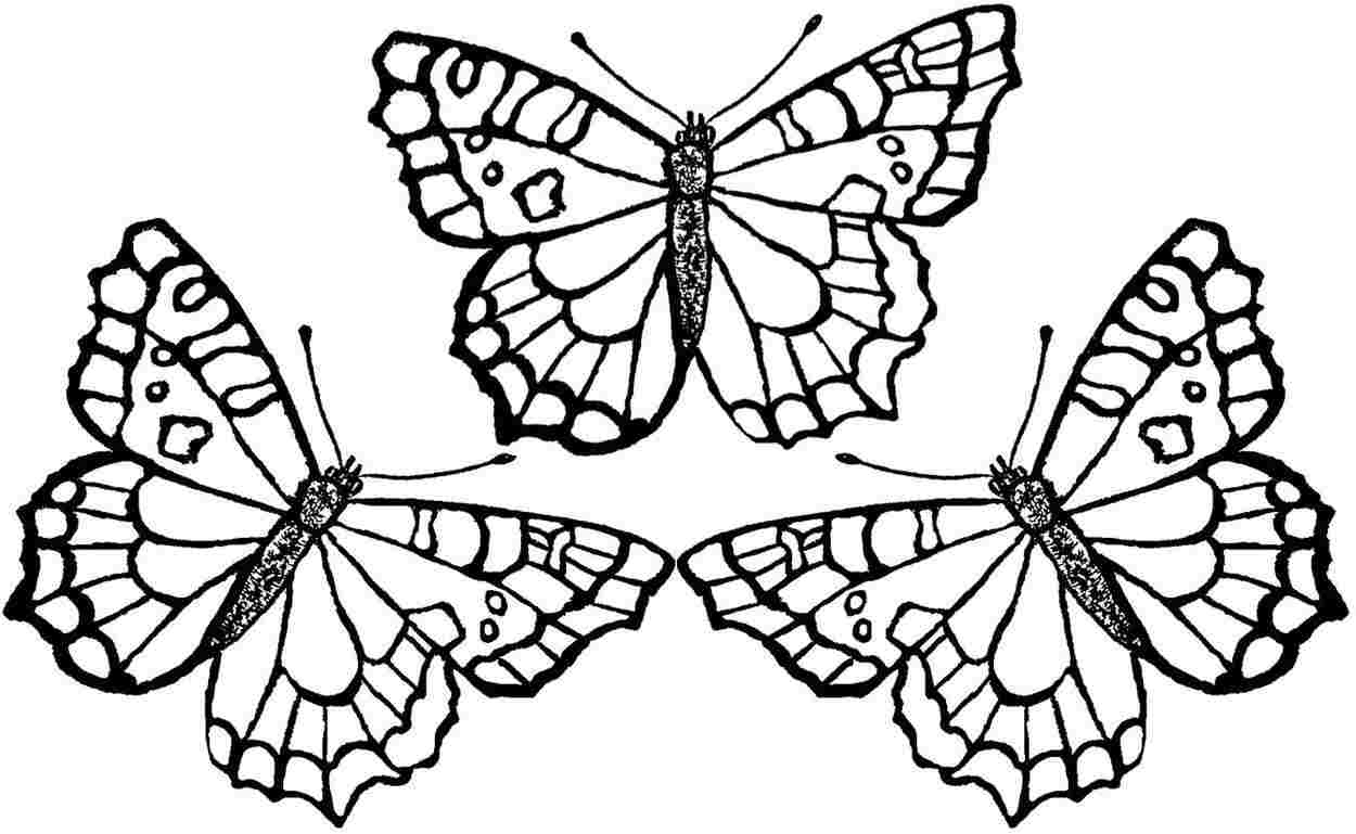 butterflies coloring page monarch butterfly coloring pages download and print for free coloring butterflies page 1 1