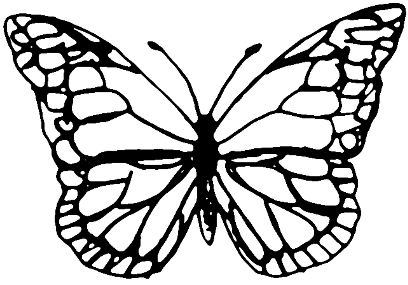 butterfly coloring template free printable butterfly colouring pages in the playroom template coloring butterfly