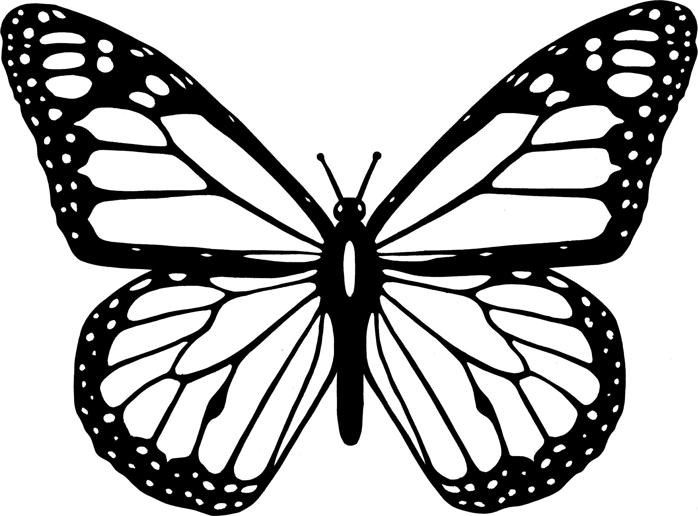 butterfly coloring template free printable butterfly templates coloring home coloring template butterfly
