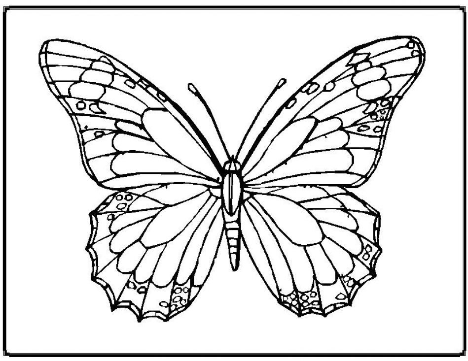 butterfly mandala coloring pages 23 free printable insect animal adult coloring pages pages butterfly mandala coloring