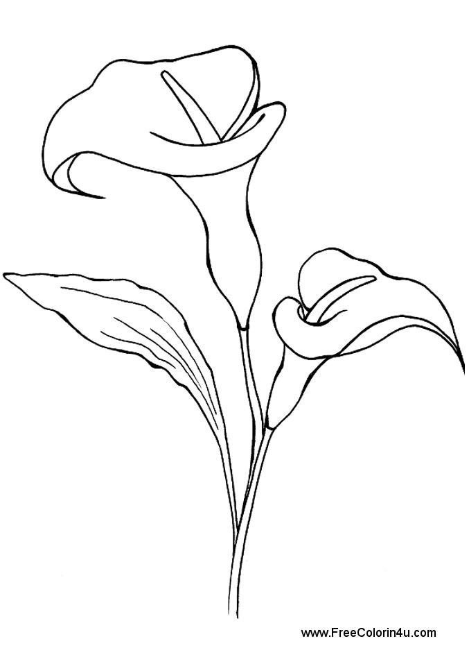 calla lily outline calla lily drawing outline free download on clipartmag outline calla lily