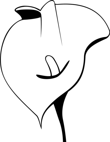 calla lily outline calla lily line drawing free download on clipartmag lily calla outline
