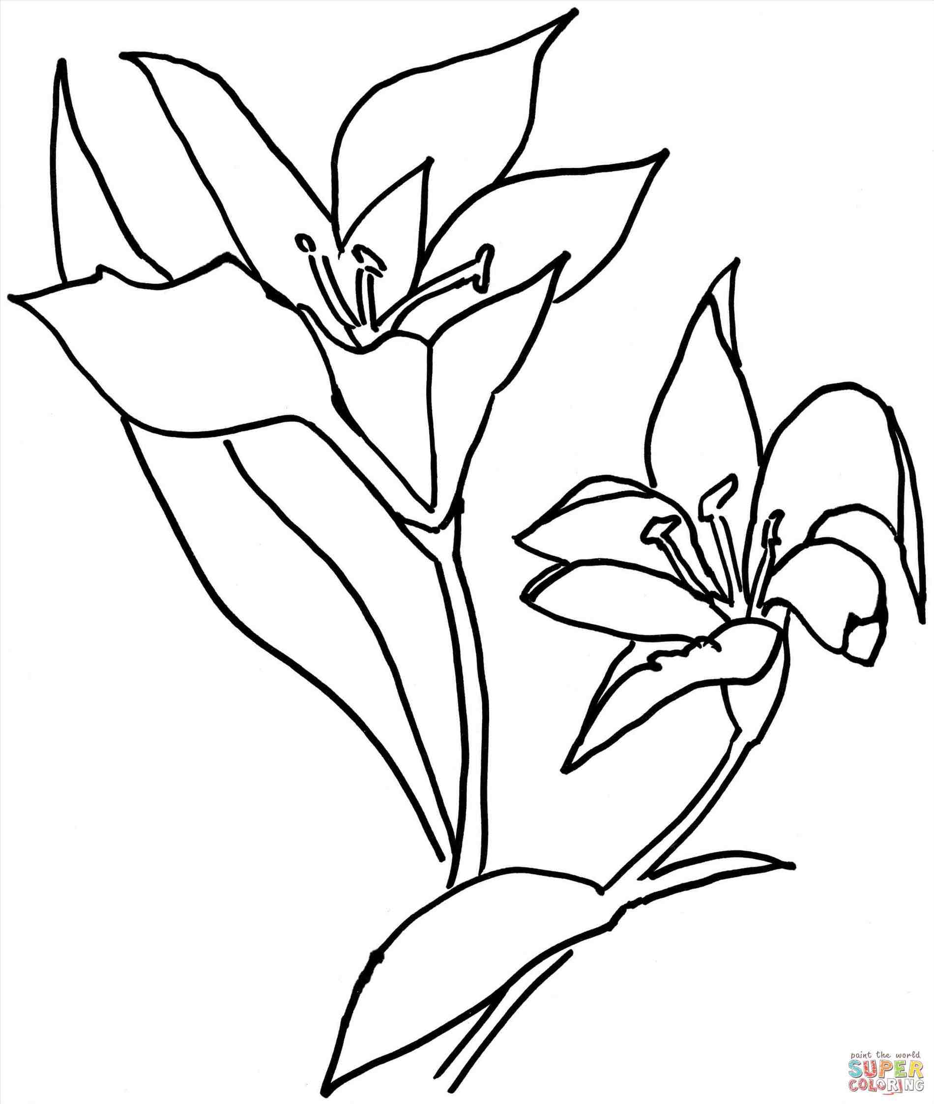 calla lily outline free vector graphic calla lily flower bloom plant outline lily calla